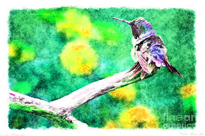 Photograph - Ruffled Hummingbird - Digital Paint 5 by Debbie Portwood