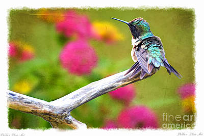 Photograph - Ruffled Hummingbird - Digital Paint 1 by Debbie Portwood