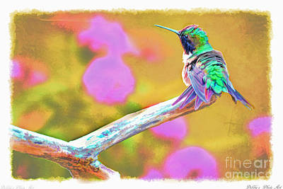 Photograph - Ruffled Hummingbird - Digital Paint 2 by Debbie Portwood