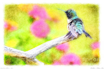 Photograph - Ruffled Hummingbird - Digital Paint 3 by Debbie Portwood
