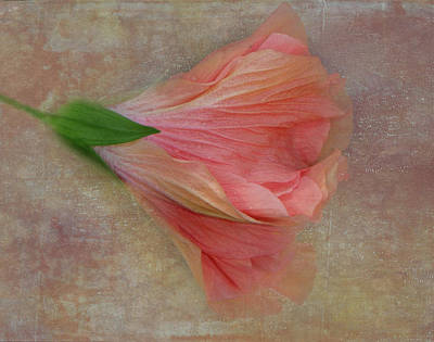 Photograph - Ruffled Petals by Judy Hall-Folde