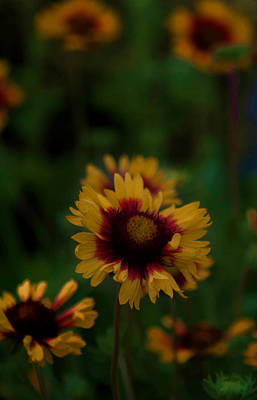 Photograph - Ruffled Up by Cherie Duran
