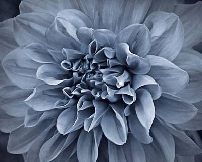 Photograph - Ruffles In Blue by Patricia Strand