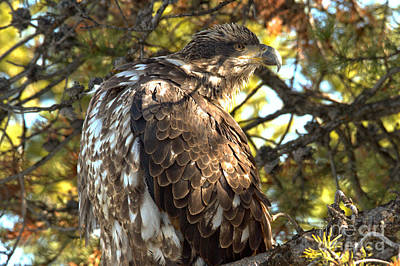Photograph - Ruffling Some Feathers by Adam Jewell