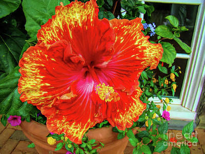 Photograph - Ruffly Red And Yellow Hibiscus by Sue Melvin