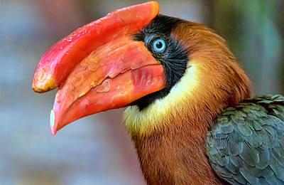 Photograph - Rufous Hornbill by Nadia Sanowar