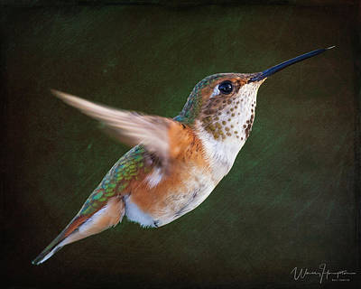 Photograph - Rufous Hummingbird - 9266,st by Wally Hampton