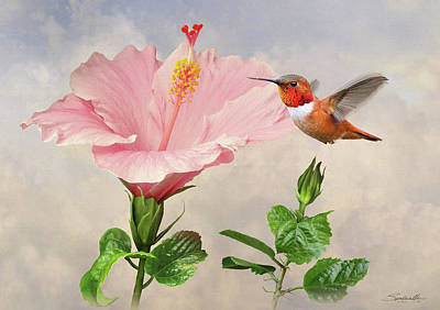 Digital Art - Rufous Hummingbird And Pink Hibiscus Flower by Spadecaller