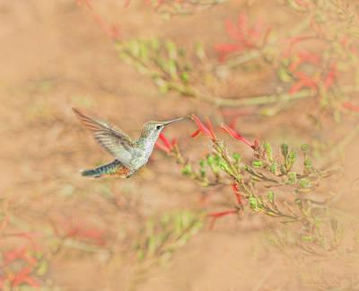 Photograph - Rufous Hummingbird In The Arizona Garden by Jennie Marie Schell