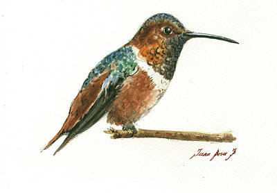 Rufous Hummingbird Watercolor Original by Juan Bosco
