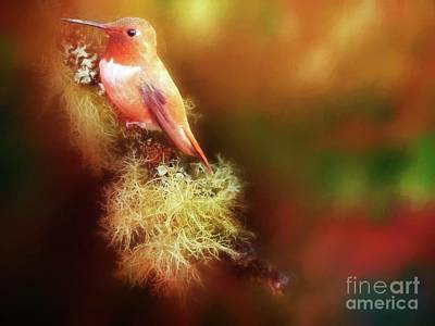 Digital Art - Rufus Hummingbird by Suzanne Handel