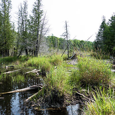 Photograph - Rugged Beauty Of Beaver Swamp by Sally Sperry