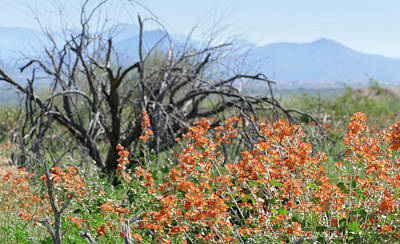 Photograph - Rugged Desert Spring by Laurel Powell