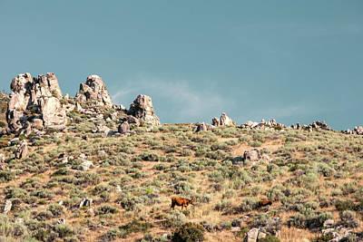 Photograph - Rugged Pasture by Todd Klassy