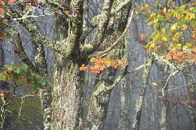 Photograph - Rugged Tree With Fall Leaves by rd Erickson