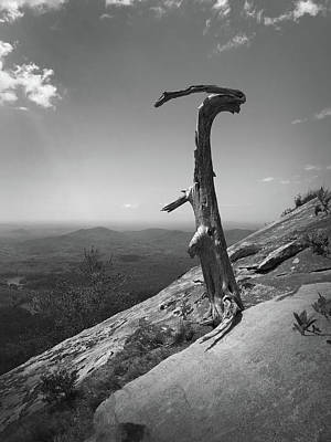 Photograph - Ruins Of A Tree At Table Rock Trail Overlook Two by Kelly Hazel
