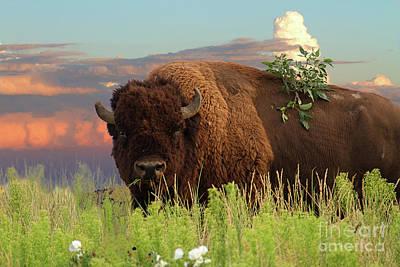 Photograph - Ruler Of The Prairie by Jim Garrison