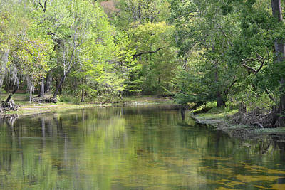Photograph - Rum Island Split - Santa Fe River Florida by rd Erickson