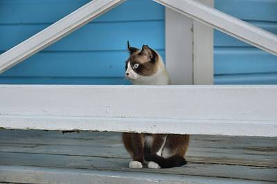 Photograph - Rum Point Feline by JAMART Photography