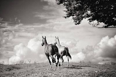 Konik Photograph - Run by Artur Baboev