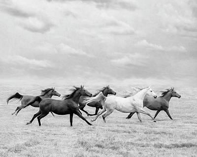 Photograph - Run Away by Phyllis Burchett