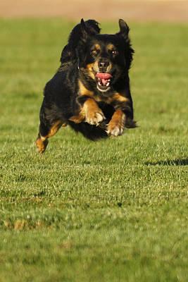 Photograph - Run Dog Run by Jill Reger