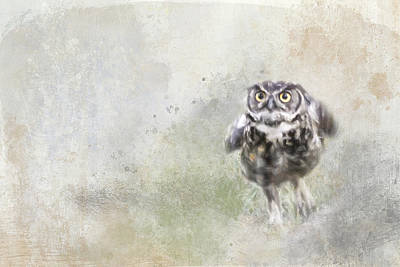 Photograph - Run Little Owl by Jai Johnson
