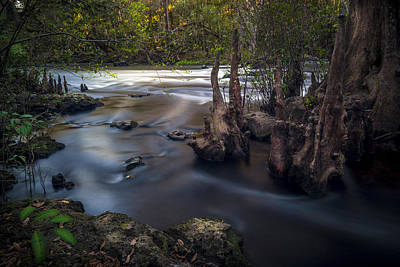 Tree Roots Photograph - Run Swiftly by Marvin Spates