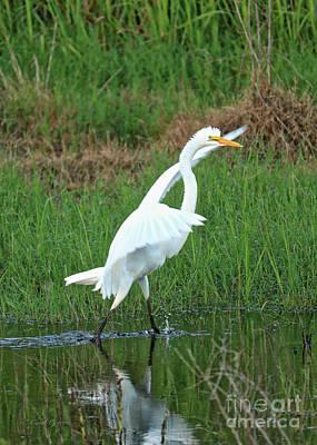 Photograph - Runaway Egret by Carol Groenen