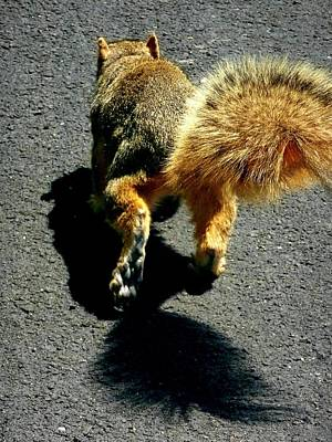Photograph - Runaway Fox Squirrel by Beth Akerman