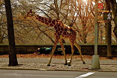 Photograph - Runaway Giraffe In New York City by Femina Photo Art By Maggie
