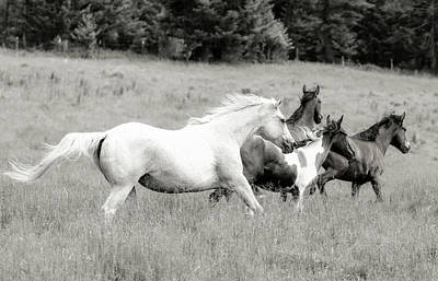 Photograph - Runaway Horses by Athena Mckinzie