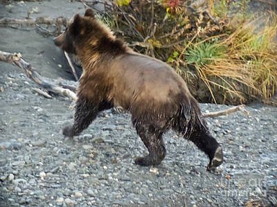 Grizzly Bear Photograph - Running Bear by Dora Miller