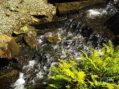 Photograph - Running Brook by Robert Knight