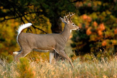 Photograph - Running Buck by Larry Ricker
