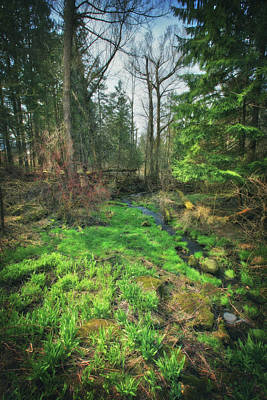 Photograph - Running Creek In Woods - Spring At Retzer Nature Center by Jennifer Rondinelli Reilly - Fine Art Photography