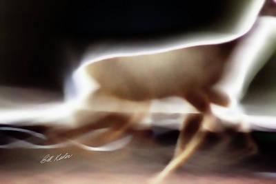 Photograph - Running Doe by Bill Kesler