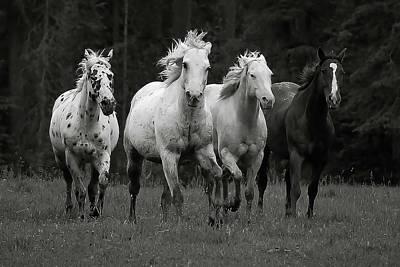 Photograph - Running Free II by Athena Mckinzie
