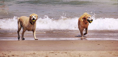 Photograph - Running Free by JAMART Photography