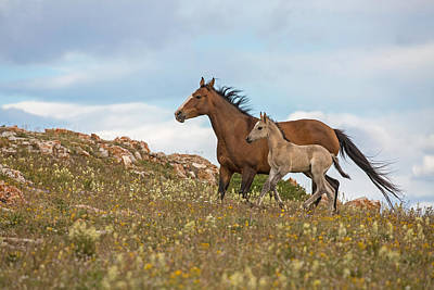 Dun Horse Photograph - Running Free by Sandy Sisti