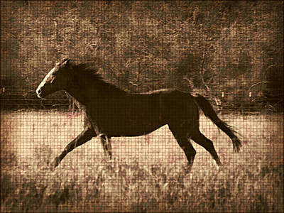 Wall Art - Photograph - Running Free After Rescue by Shannon Story