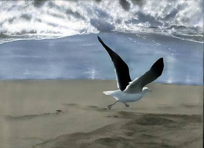 Painting - Running Gull by Charles Parks
