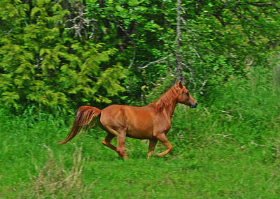 Photograph - Running Horse by Jack Moskovita