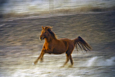 Photograph - Running Horse by James Steele