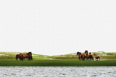 Photograph - Running Horses In The Marsh by Dan Friend