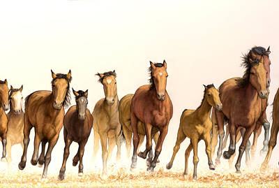 West Texas Painting - Running Horses by James W Johnson