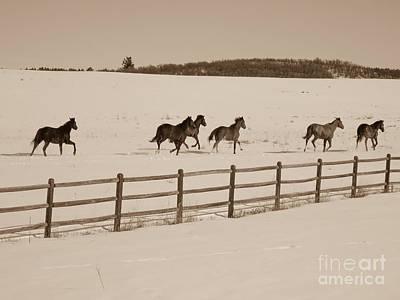Running Horses - Larkspur, Co Art Print