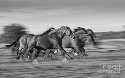 Photograph - Running Horses by Patti Schulze