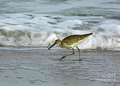 Photograph - Running In The Surf by D Hackett