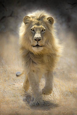 Male Digital Art - Running Lion by Stu  Porter